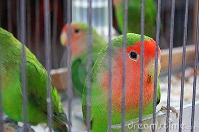 canary-birds-cage-3578921.jpg