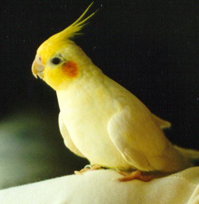 cockatiel-cage11.jpg