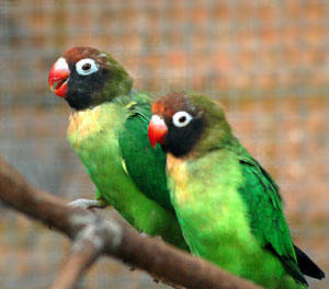 lovebirds-1.jpg